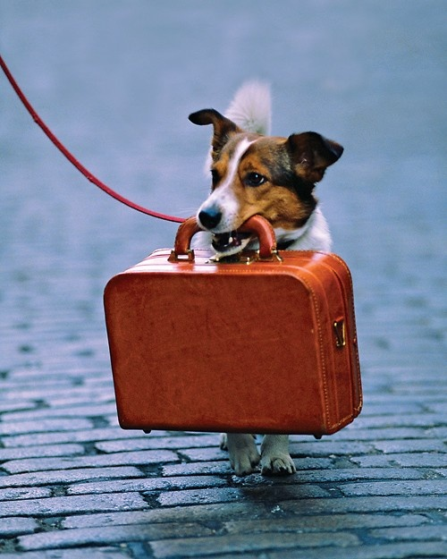 Dog travel mini kittour for Air travel with dog in cabin